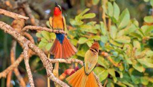 birds-uganda
