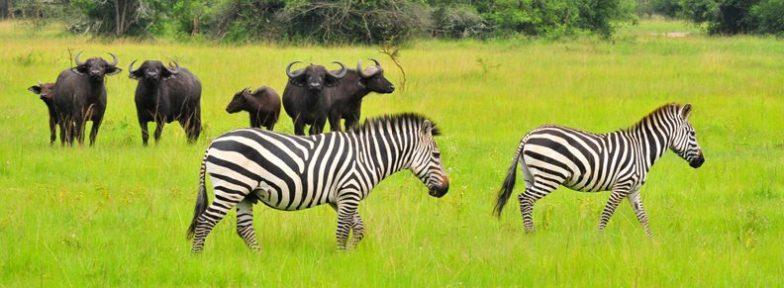 Wild life in Lake Mburo National Park