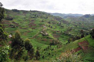 Uganda Hilly Areas 8 Days Primates and Wildlife Safari