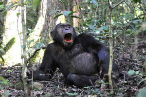 9 Days Gorilla Chimp Safaris