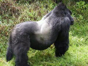 12 Days Uganda Wilderness Discovery Safari